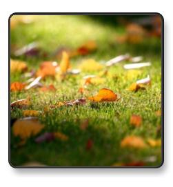 grass-leaf.jpg